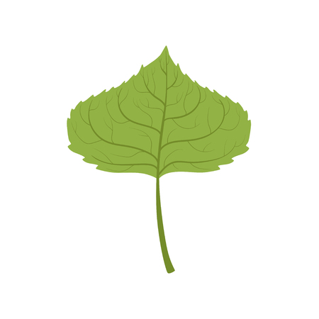 Aspen tree green leaf vector Illustration on a white background Ilustracja