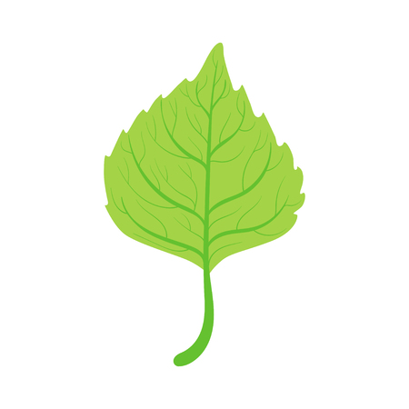 Groene het blad vectorillustratie van de lindeboom op een witte achtergrond