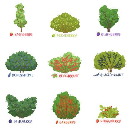 Différentes sortes d'arbustes de baies de jardin avec noms, arbres fruitiers et vecteur d'arbustes à baies Illustrations sur fond blanc