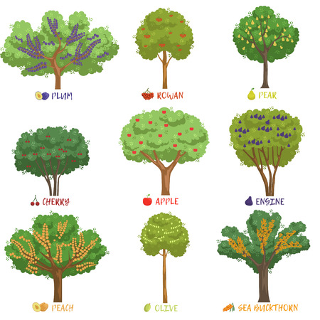 Different fruit trees sorts with names set, garden trees and berry bushes vector Illustrations on a white background