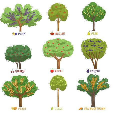 Verschillende fruitbomen soorten met namen set, tuin bomen en bessenstruiken vector illustraties op een witte achtergrond Stockfoto - 85576686