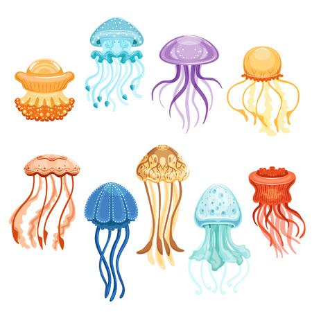 Le meduse variopinte mettono, nuotano le illustrazioni marine di vettore dell'acquerello delle creature su un fondo bianco Archivio Fotografico - 85576703