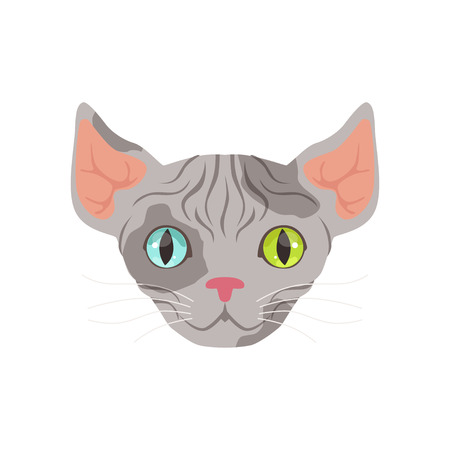 Cute grey sphinx cat with eyes of different colors, funny cartoon animal character vector illustration Illustration