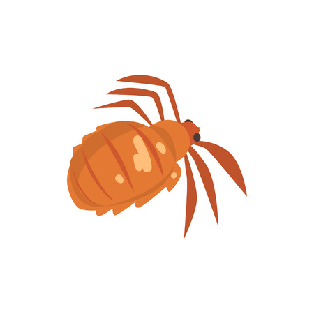 Head louse insect parasite cartoon vector illustration