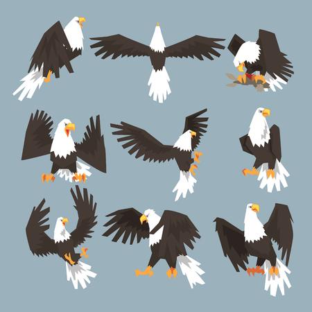 Weißkopfseeadler ein Bild-Set Jagd auf grauem Hintergrund Standard-Bild - 87228009