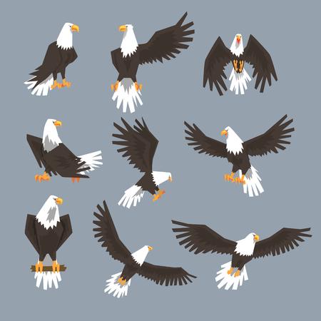 Bald Eagle Image Set On Grey Background