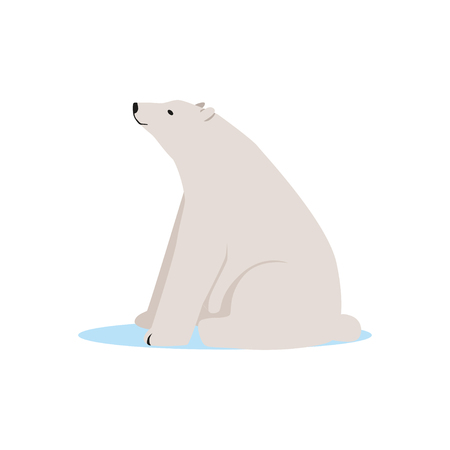 White polar bear animal, Arctic fauna species vector Illustration Иллюстрация