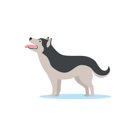 Siberian husky dog vector Illustration