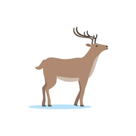 Reindeer animal, Arctic fauna species vector Illustration