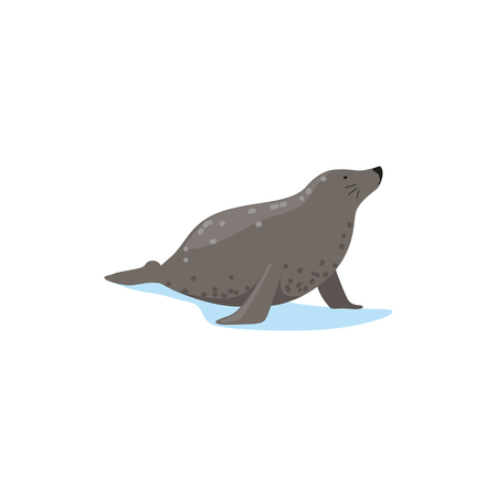 Harbor seal, Arctic fauna species vector Illustration