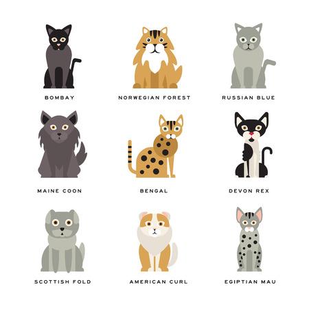 猫のフラット国内品種  イラスト・ベクター素材
