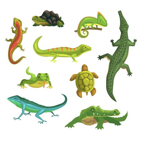 Reptielen en amfibieën set van vectorillustraties Stockfoto - 88055651