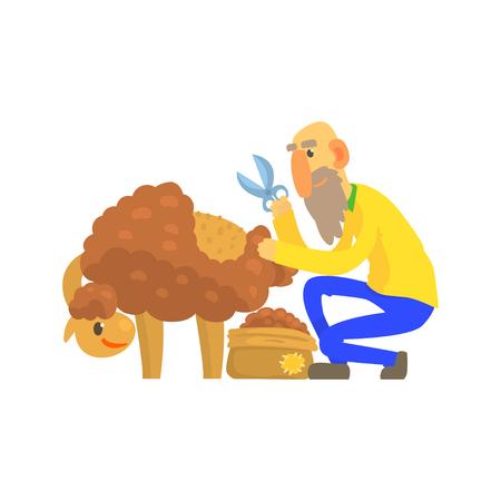 Old bearded farmer sheaving wool from sheep