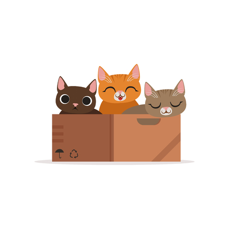 Three funny cats of diffferent colors in a box vector Illustration