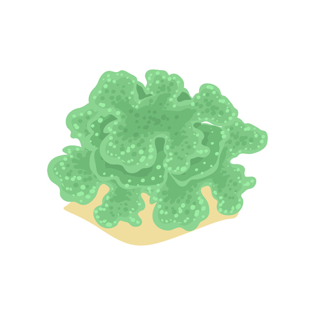 Cartoon illustration of green algae from tropical coral reefs. Sea and ocean wildlife underwater world