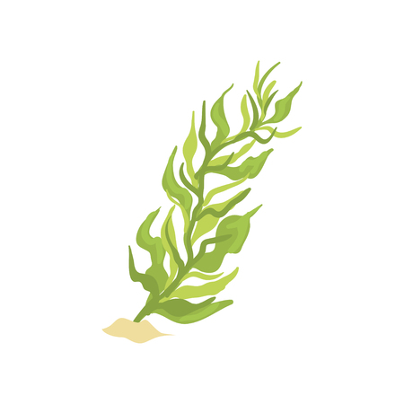 Illustration of green seaweed in cartoon flat design. Aquarium design element. Coral icon. Illustration