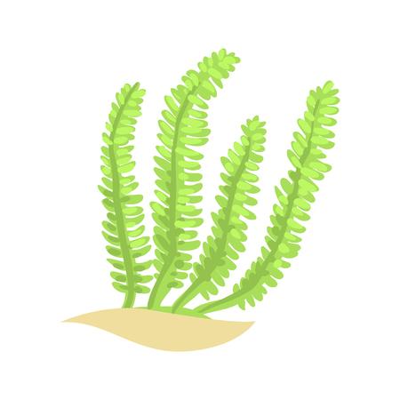 Algue à plumes vert vif. Plante aquatique tropicale dans le style plat. Élément du monde sous-marin de vecteur