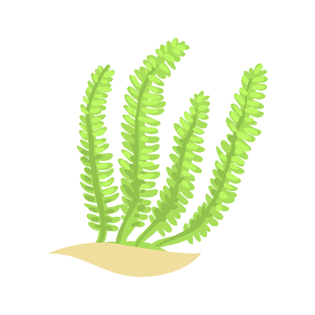 Bright green feather alga. Tropical aquatic plant in flat style. Vector underwater world element