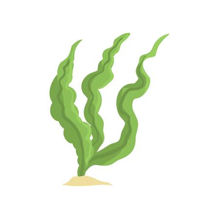 흰색 배경에 고립 된 긴 녹색 조류의 벡터 일러스트 레이 션. 모래 바닥에 바다 잔디