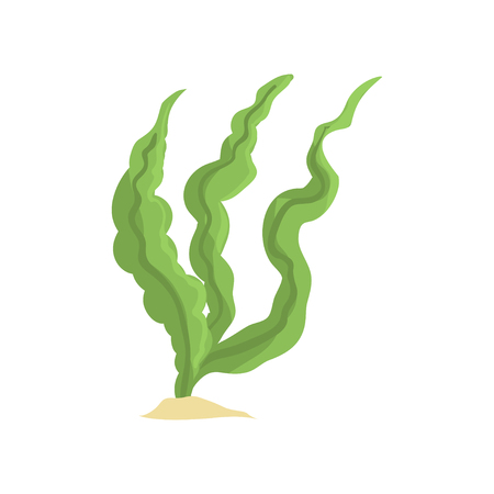 Vector Illustration von den langen grünen Algen, die auf weißem Hintergrund lokalisiert werden. Seegras auf sandigem Grund