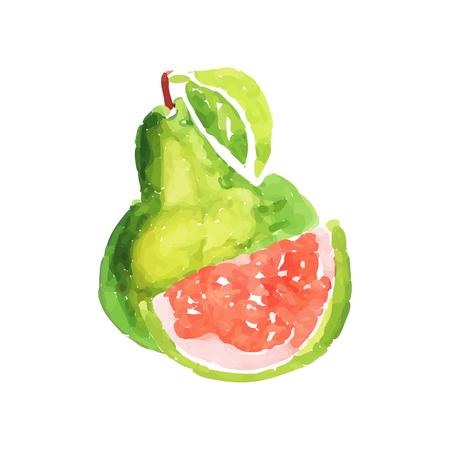 Juicy ripe guava fruit watercolor hand painting vector Illustration Illustration