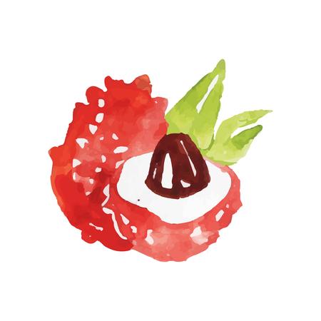 Juteux litchi mûr fruits aquarelle main peinture vecteur Illustration Banque d'images - 89730116