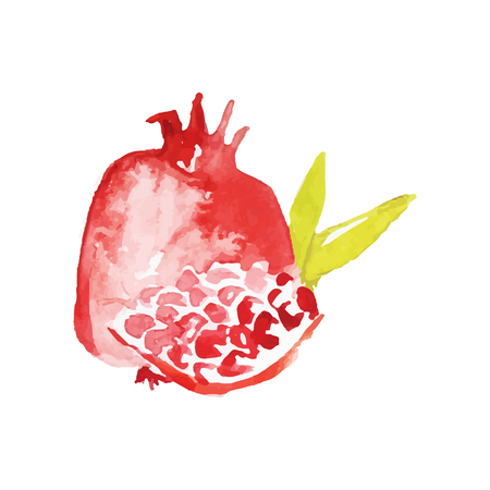 Juicy ripe pomegranate fruit watercolor hand painting vector Illustration