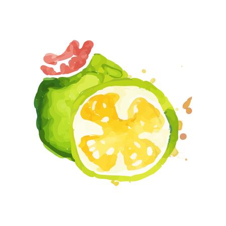 Juicy ripe feijoa fruit watercolor hand painting vector Illustration