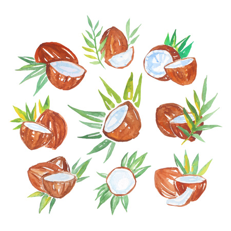 Coconuts with palm leaves set of watercolor vector Illustrations on a white background