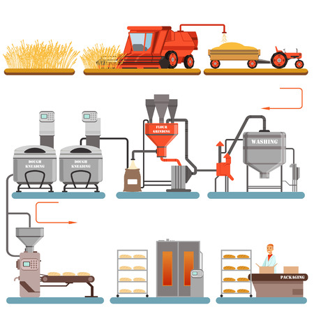 Bread production process stages from wheat harvest to freshly baked bread vector Illustrations isolated on a white background Banco de Imagens - 90329484