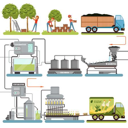 Etapas del proceso de producción de aceite de oliva, cosecha de aceitunas, embalaje de productos terminados y entrega a vectores de consumo Ilustraciones aisladas sobre fondo blanco Ilustración de vector