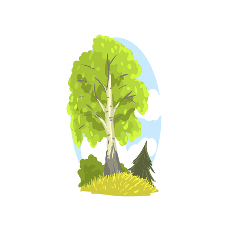 Spring or summer landscape scene with birch, fir and bushes behind. Deciduous tree with green foliage. Hand drawn forest design element. Flat vector