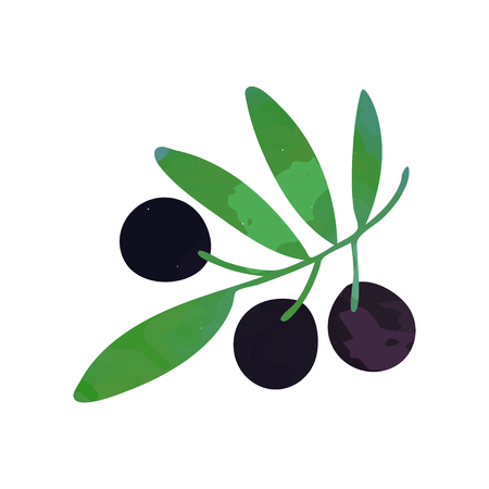 Decorative branch with black ripe olives and green foliage. Natural and healthy food concept. Isolated flat vector design element for book illustration, agriculture company oil label