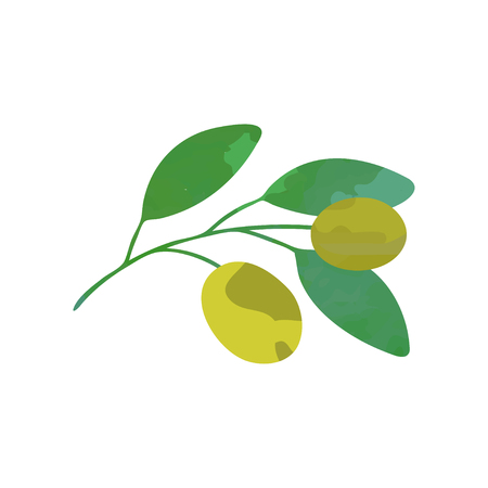 Vector olive branch with green leaves. Natural icon in flat style. Healthy product. Botanical illustration design