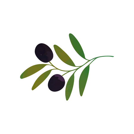 Vector decorative branch with black olives and green leaves isolated on white. Healthy food. Organic care cosmetics. Illustration