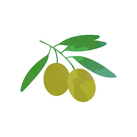 Illustration of branch olive with green foliage. Flat design vector isolated on white. Graphic template for skin and hair care cosmetics label or company Illustration