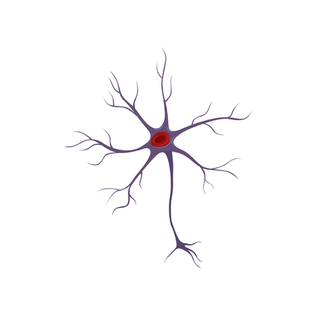 Structure of neuron, nerve cell. Anatomy and science concept. Icon in flat style. Flat vector design for medical brochure, poster or infographic