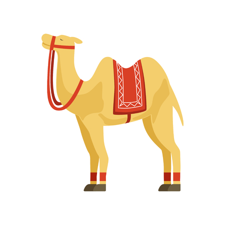 Camel with saddle and cover on the back, desert animal, symbol of traditional Egyptian culture vector Illustration on a white background