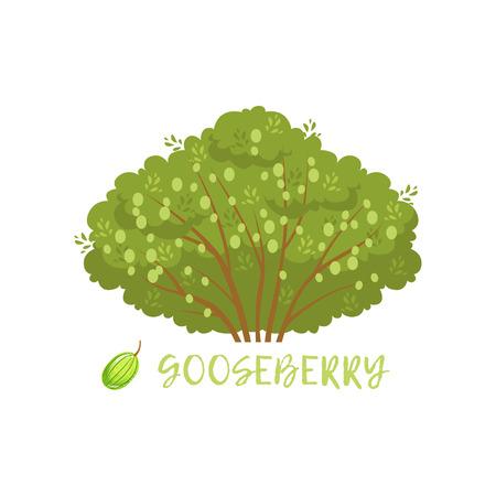 Gooseberry garden berry bush with name vector Illustration