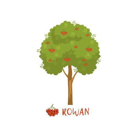 赤い果実と名前ベクトルを持つローワンの木 イラスト
