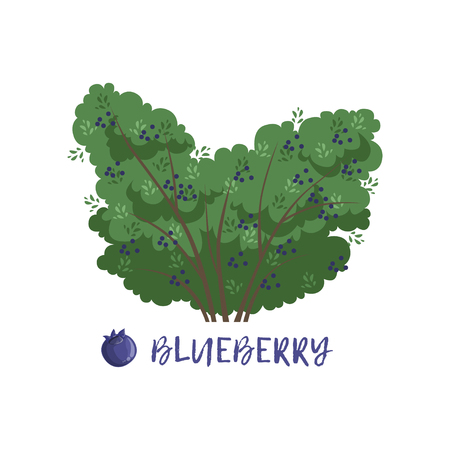 Blueberry berry bush with name vector Illustration Illustration