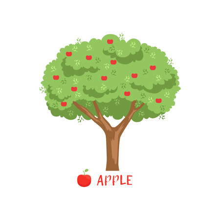 Apple garden fruit tree with red apples and name vector Illustration