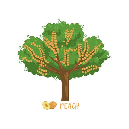 이름 벡터 일러스트와 함께 복숭아 정원 과일 나무