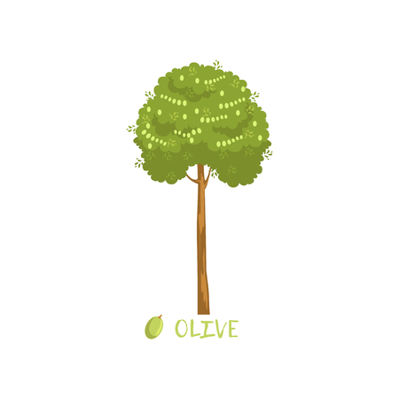 Olive tree with name vector Illustration