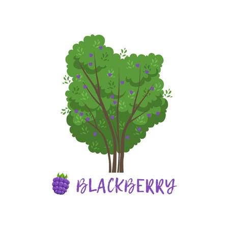 garden berry bush with name vector Illustration