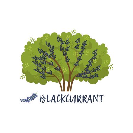 ブラックカラントガーデンベリーブッシュと名前ベクトルイラスト