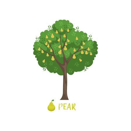 白い背景に名前ベクトルイラストを持つ梨ガーデンフルーツツリー