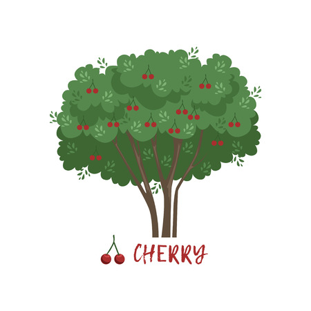 Cherry garden berry bush with name vector Illustration