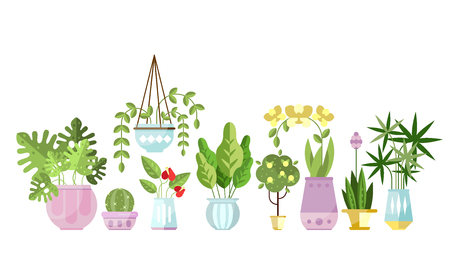 Set of flat style colorful houseplants in pots standing in line. Cactus, pipal, orchid, ivy, palm, Monstera. Home decorative, and deciduous green plants. Vector indoor flowers isolated on white.