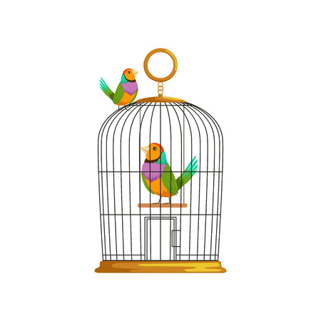 Cartoon couple of multi-colored tropical birds. Antique hanging cage. Domestic animals. Design element for pet shop, website or business flyer. Flat vector illustration isolated on white background.
